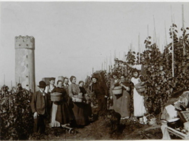 Weinlese um 1920 am Veitsburghang (Stadtarchiv RV)